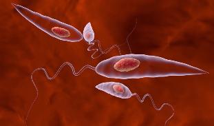 Sunând pe paraziți Paraziti cilveka organisma simptomi, Paraziti cilveka organisma